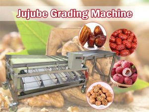 jujube grading machine