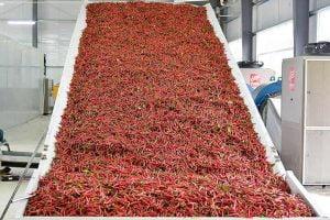 chili drying machine